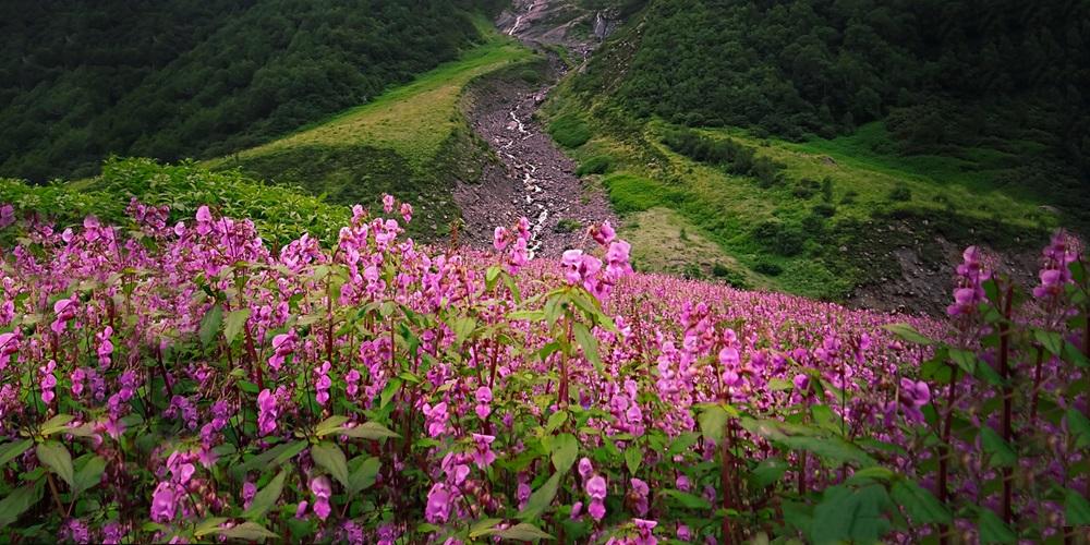 6 Day Valley Of Flowers Trekking Tour Haridwar Uttarakhand India Bookmountaintours Com
